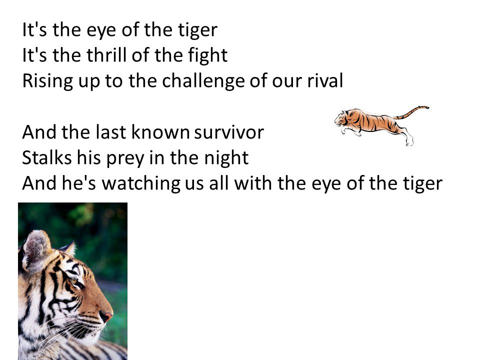 It s the eye of the tiger It s the thrill of the fight Rising up to the challenge of our rival And the last known survivor Stalks his prey in the night And he s watching us all with the eye of the tiger