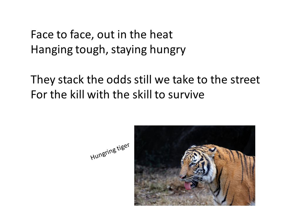 Face to face, out in the heat Hanging tough, staying hungry They stack the odds still we take to the street For the kill with the skill to survive Hungring tiger