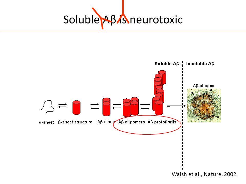 Soluble Aβ is neurotoxic Walsh et al., Nature, 2002