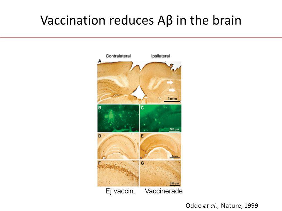 Vaccination reduces Aβ in the brain Oddo et al., Nature, 1999 Ej vaccin.Vaccinerade