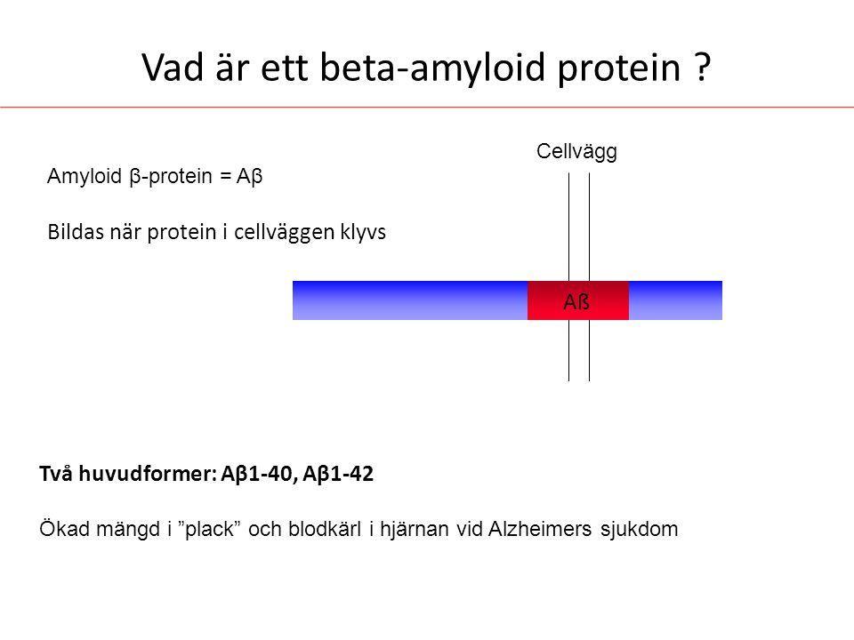 """Vad är ett beta-amyloid protein ? Amyloid β-protein = Aβ Bildas när protein i cellväggen klyvs Aß Två huvudformer: Aβ1-40, Aβ1-42 Ökad mängd i """"plack"""""""