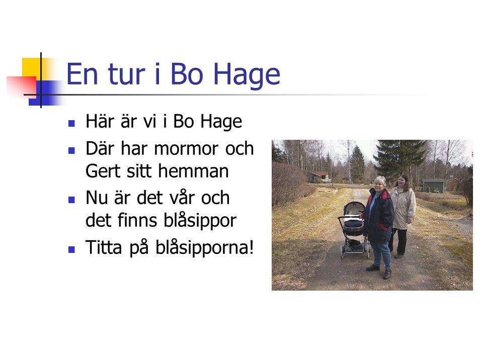 En tur i Bo Hage Här är vi i Bo Hage Där har mormor och Gert sitt hemman Nu är det vår och det finns blåsippor Titta på blåsipporna!