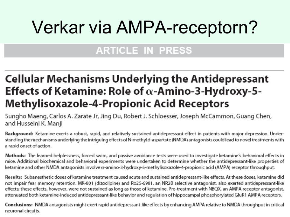 Verkar via AMPA-receptorn?