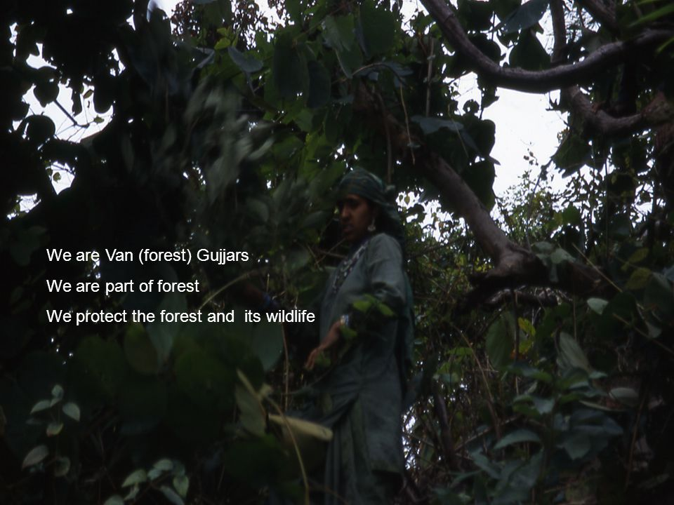 Mustooq Lambardar: Van Gujjar leader (citat från 1992) There are many Gujjars in India but I am only speaking for the Van (forest) Gujjars.