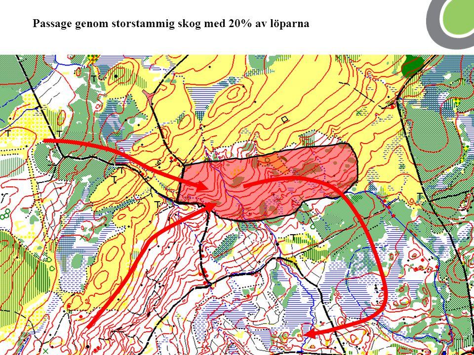Passage genom storstammig skog med 20% av löparna