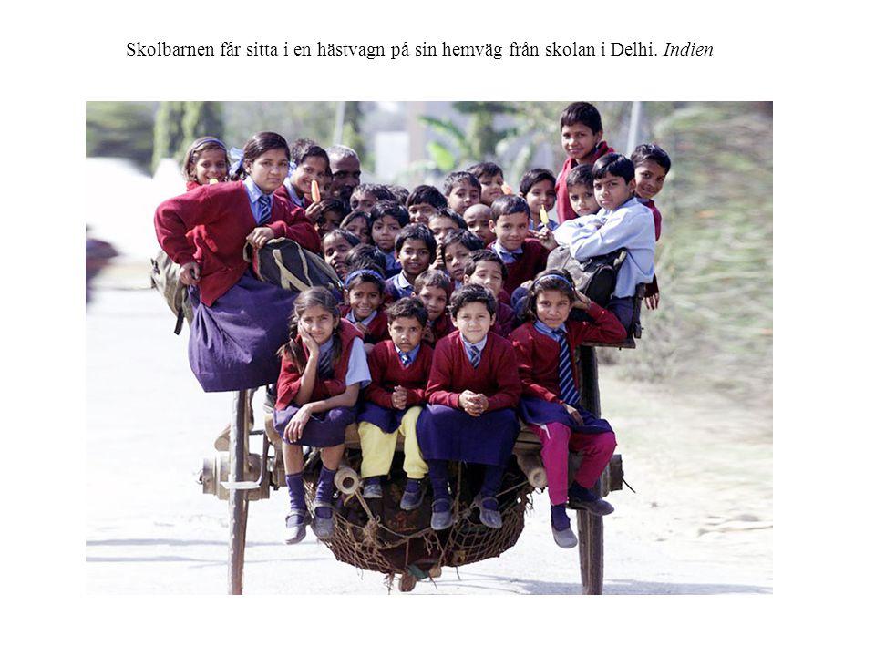 Skolbarnen får sitta i en hästvagn på sin hemväg från skolan i Delhi. Indien