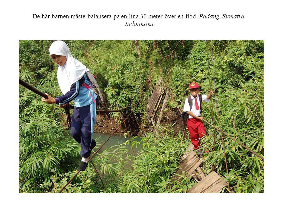 De här barnen måste balansera på en lina 30 meter över en flod. Padang, Sumatra, Indonesien