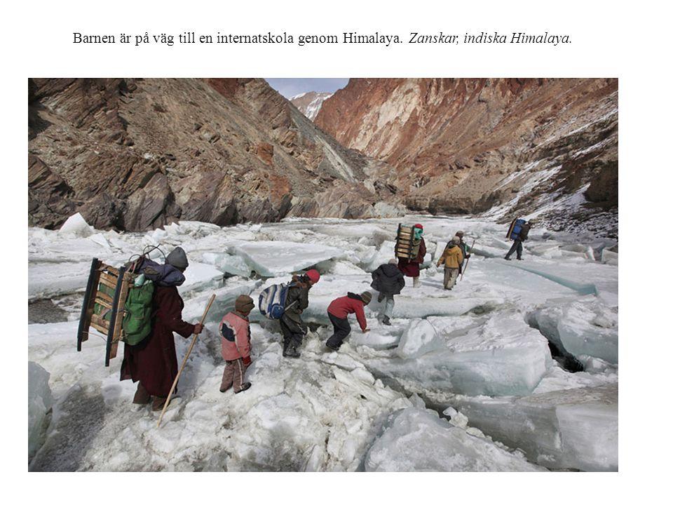 Barnen är på väg till en internatskola genom Himalaya. Zanskar, indiska Himalaya.