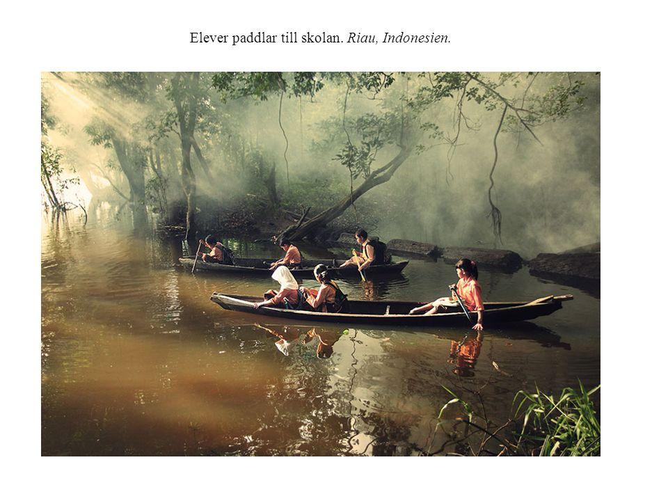 Elever paddlar till skolan. Riau, Indonesien.