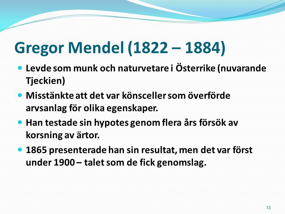 23 Gregor Mendel (1822 – 1884) Levde som munk och naturvetare i Österrike (nuvarande Tjeckien) Misstänkte att det var könsceller som överförde arvsanl