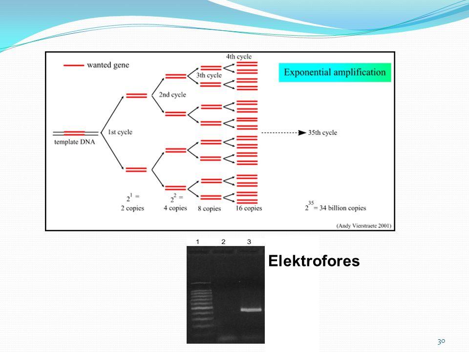 30 Elektrofores