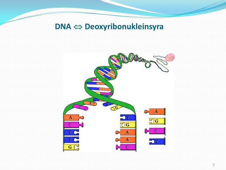 7 DNA  Deoxyribonukleinsyra