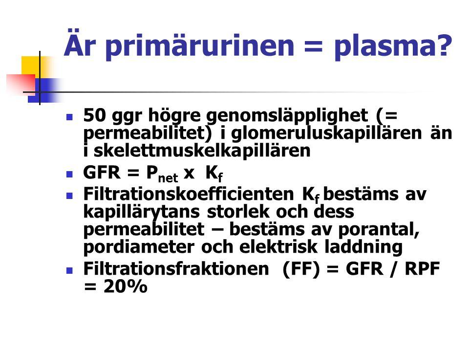 Är primärurinen = plasma? 50 ggr högre genomsläpplighet (= permeabilitet) i glomeruluskapillären än i skelettmuskelkapillären GFR = P net x K f Filtra