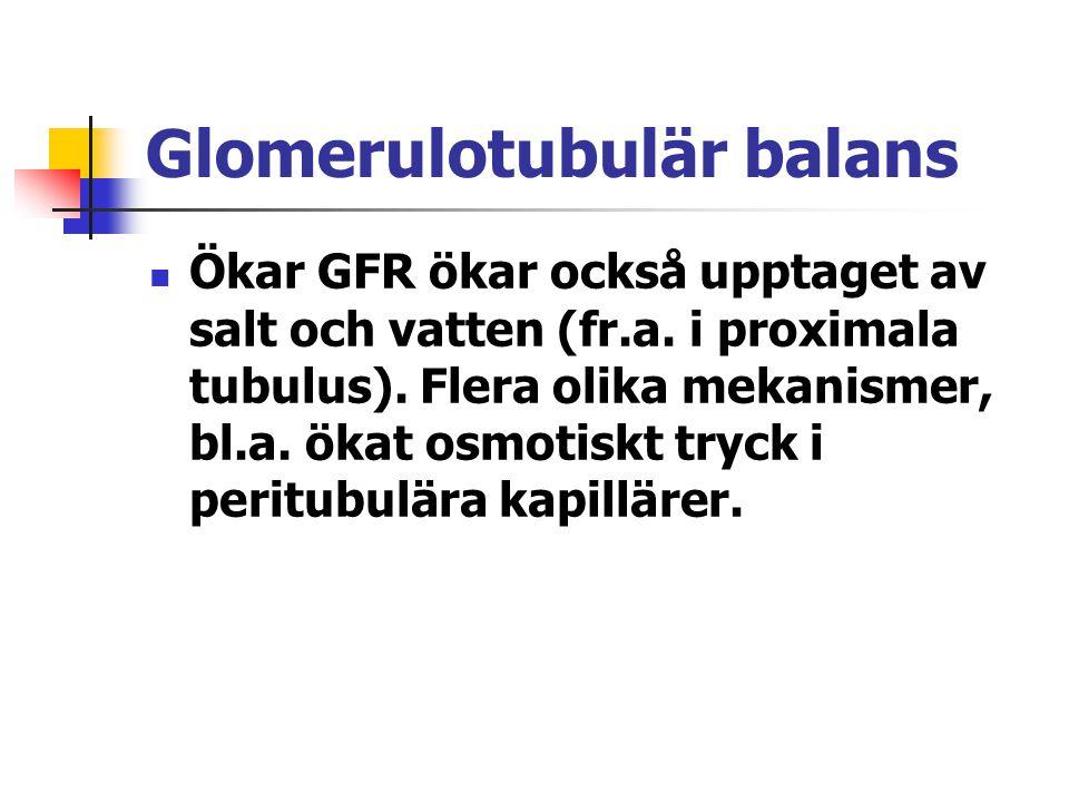 Glomerulotubulär balans Ökar GFR ökar också upptaget av salt och vatten (fr.a. i proximala tubulus). Flera olika mekanismer, bl.a. ökat osmotiskt tryc