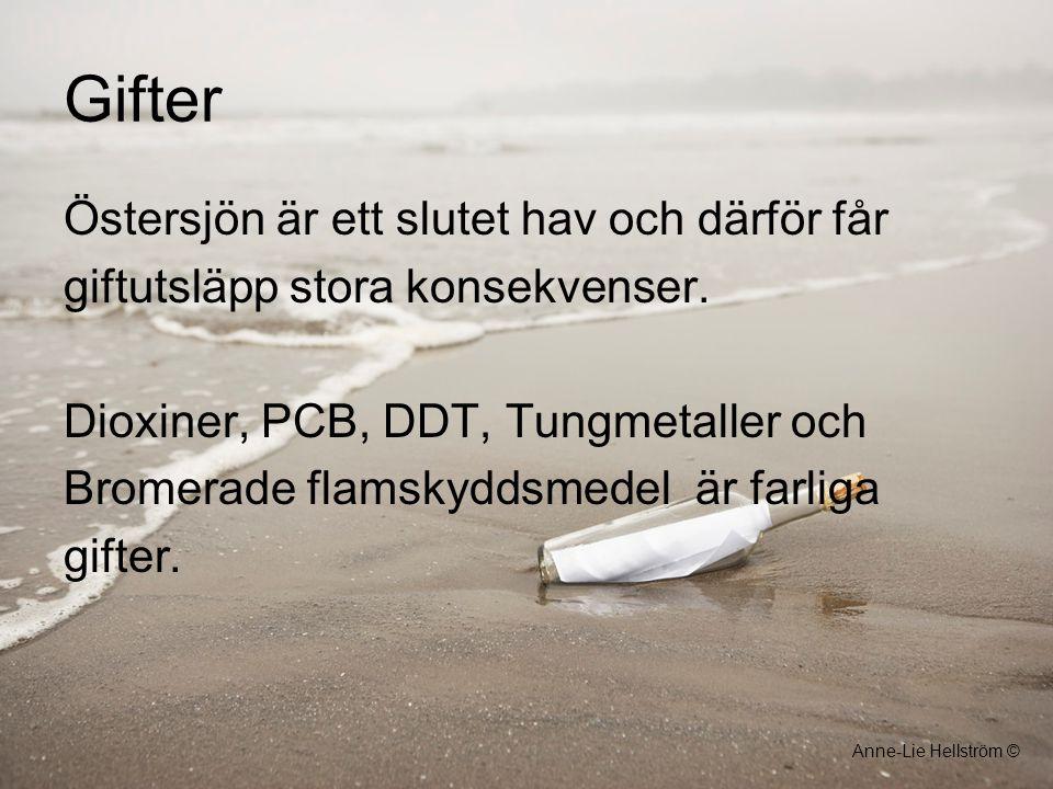 Gifter Östersjön är ett slutet hav och därför får giftutsläpp stora konsekvenser. Dioxiner, PCB, DDT, Tungmetaller och Bromerade flamskyddsmedelär far
