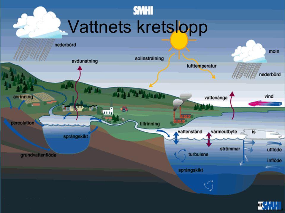 Varför är havet salt Vattnet som är på väg till havet löser ut mineraler ur marken – de blir havets salt.