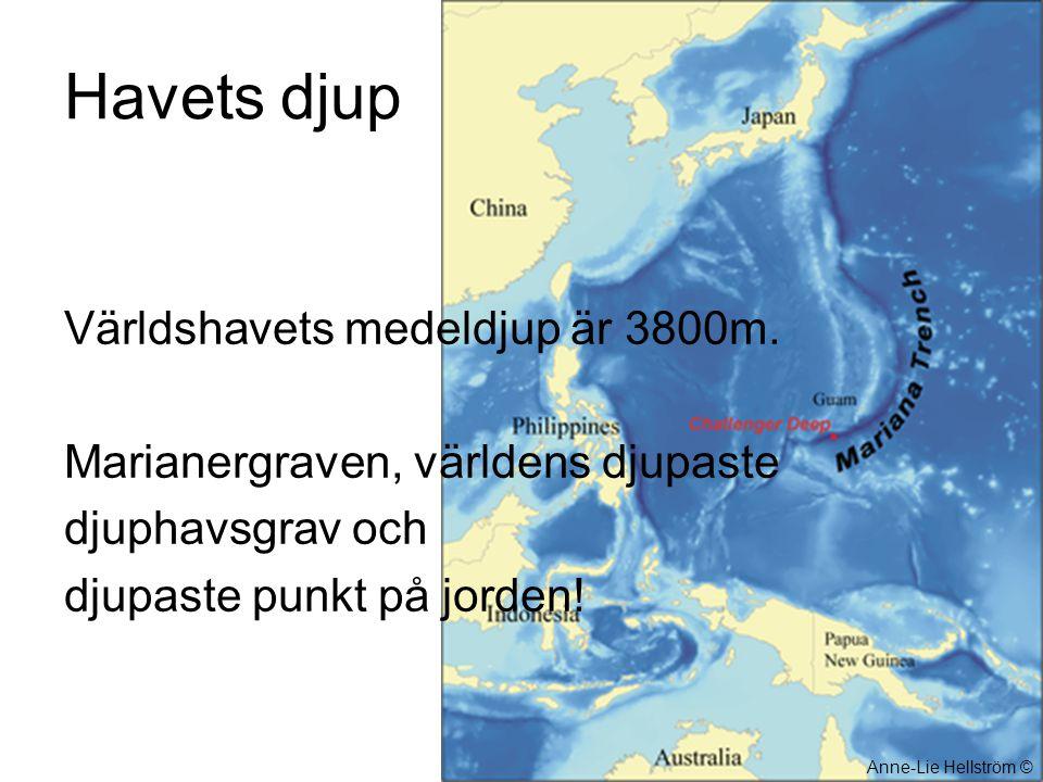 Havets djup Världshavets medeldjup är 3800m. Marianergraven, världens djupaste djuphavsgrav och djupaste punkt på jorden! Anne-Lie Hellström ©