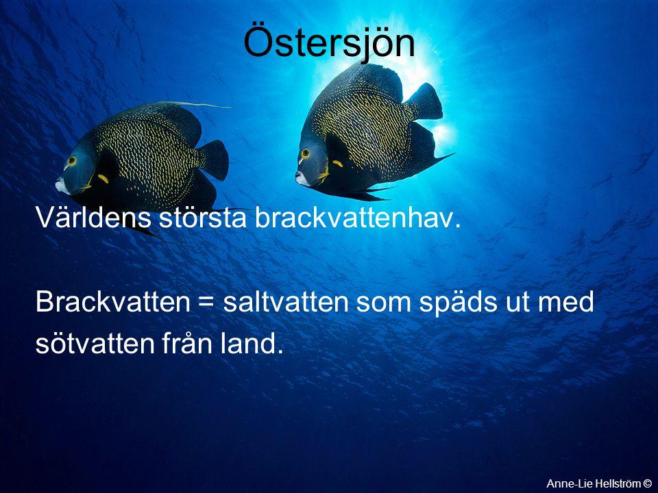 Östersjöns vatten är saltast, 3%, närmast Atlanten Östersjöns vatten är minst salt, 0,3%, högst upp i bottenviken Anne-Lie Hellström ©