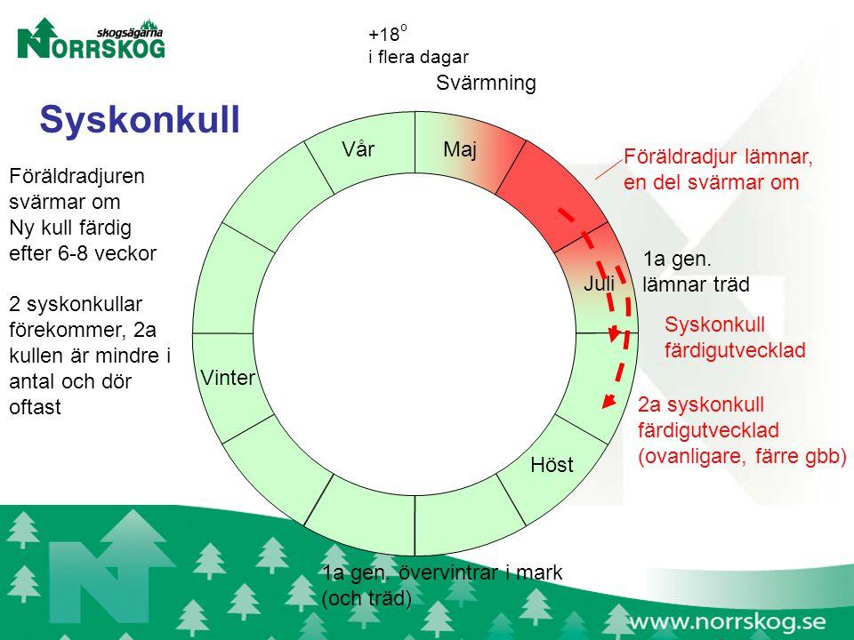 Maj Juli Svärmning 1a gen. lämnar träd +18 o i flera dagar 1a gen.