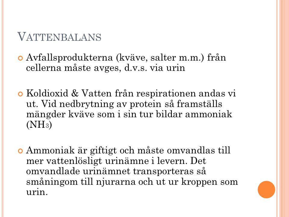 V ATTENBALANS Avfallsprodukterna (kväve, salter m.m.) från cellerna måste avges, d.v.s.
