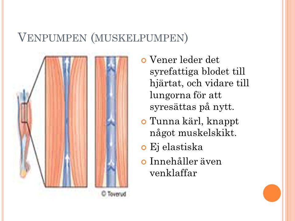 V ENPUMPEN ( MUSKELPUMPEN ) Vener leder det syrefattiga blodet till hjärtat, och vidare till lungorna för att syresättas på nytt.