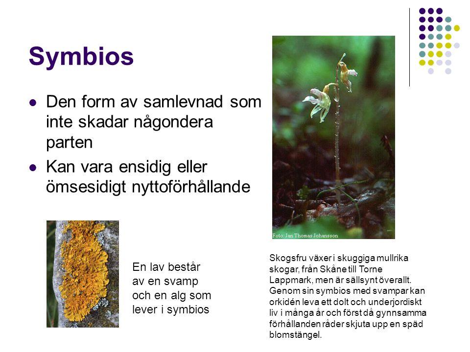 Symbios Den form av samlevnad som inte skadar någondera parten Kan vara ensidig eller ömsesidigt nyttoförhållande Skogsfru växer i skuggiga mullrika s