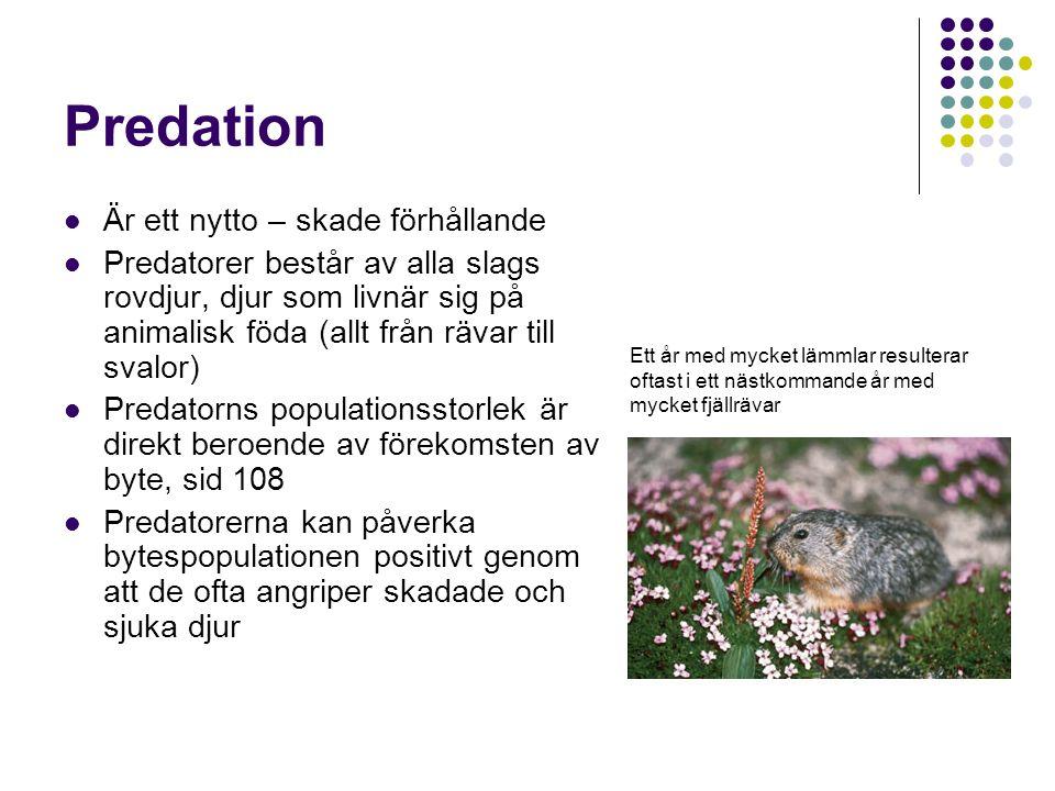 Predation Är ett nytto – skade förhållande Predatorer består av alla slags rovdjur, djur som livnär sig på animalisk föda (allt från rävar till svalor