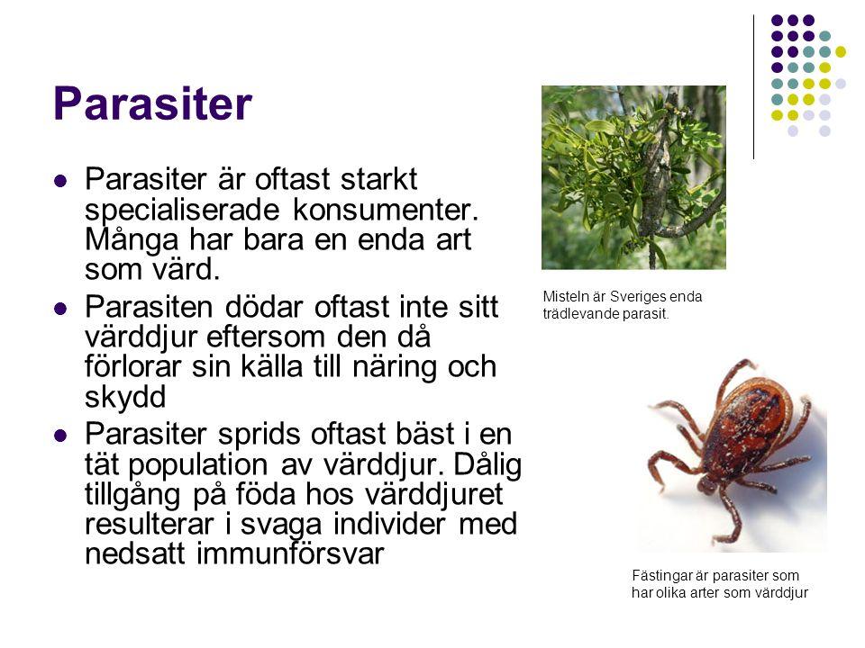 Parasiter Parasiter är oftast starkt specialiserade konsumenter. Många har bara en enda art som värd. Parasiten dödar oftast inte sitt värddjur efters