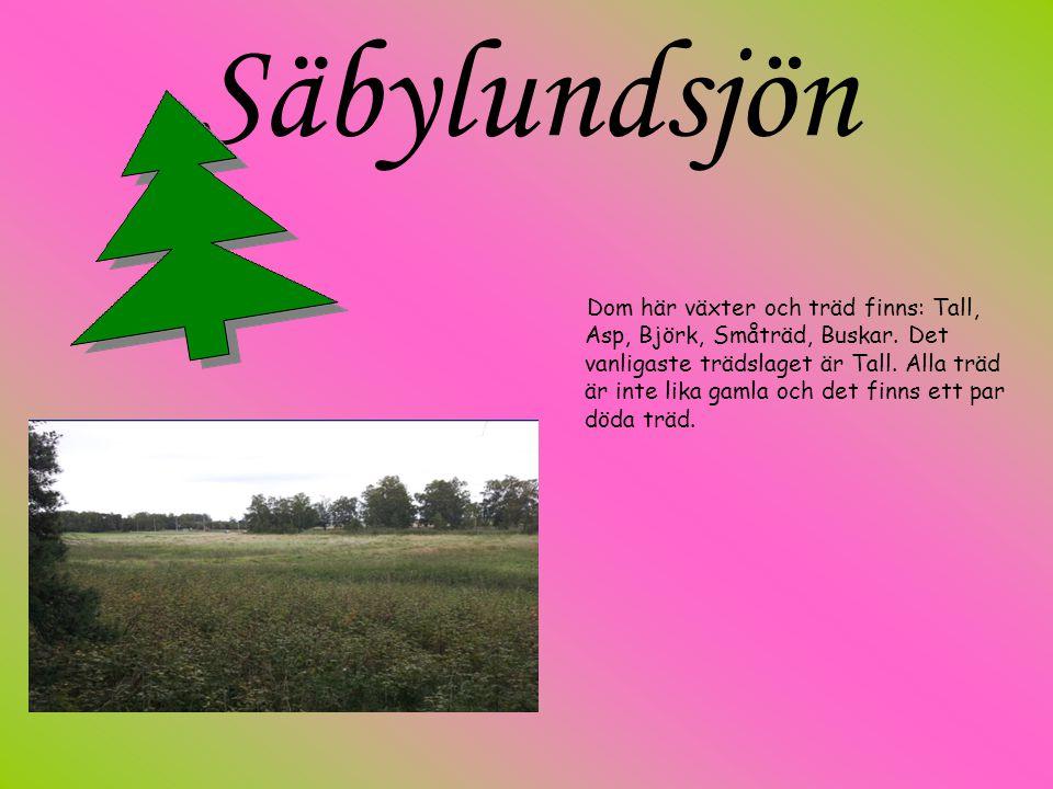 Säbylundsjön Dom här växter och träd finns: Tall, Asp, Björk, Småträd, Buskar. Det vanligaste trädslaget är Tall. Alla träd är inte lika gamla och det