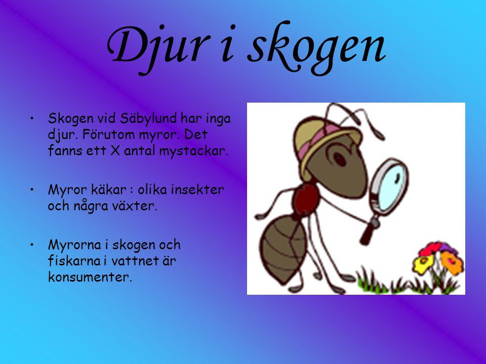 Djur i skogen Skogen vid Säbylund har inga djur. Förutom myror. Det fanns ett X antal mystackar. Myror käkar : olika insekter och några växter. Myrorn
