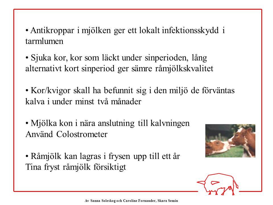 Av Sanna Soleskog och Caroline Fornander, Skara Semin Antikroppar i mjölken ger ett lokalt infektionsskydd i tarmlumen Sjuka kor, kor som läckt under sinperioden, lång alternativt kort sinperiod ger sämre råmjölkskvalitet Kor/kvigor skall ha befunnit sig i den miljö de förväntas kalva i under minst två månader Mjölka kon i nära anslutning till kalvningen Använd Colostrometer Råmjölk kan lagras i frysen upp till ett år Tina fryst råmjölk försiktigt