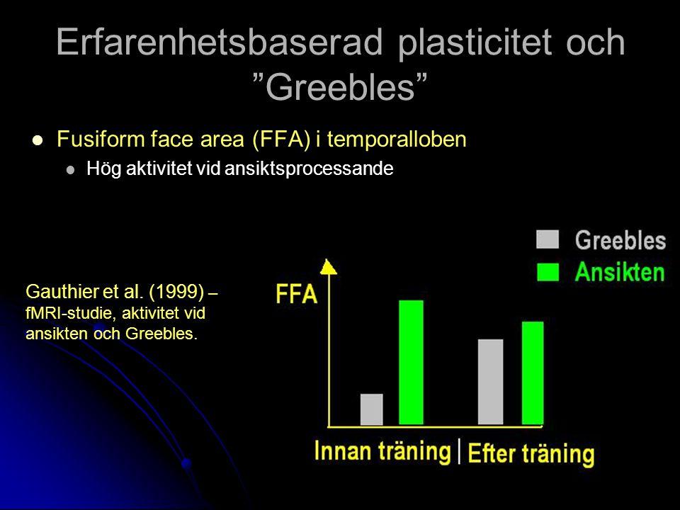 Erfarenhetsbaserad plasticitet och Greebles Fusiform face area (FFA) i temporalloben Fusiform face area (FFA) i temporalloben Hög aktivitet vid ansiktsprocessande Hög aktivitet vid ansiktsprocessande Gauthier et al.
