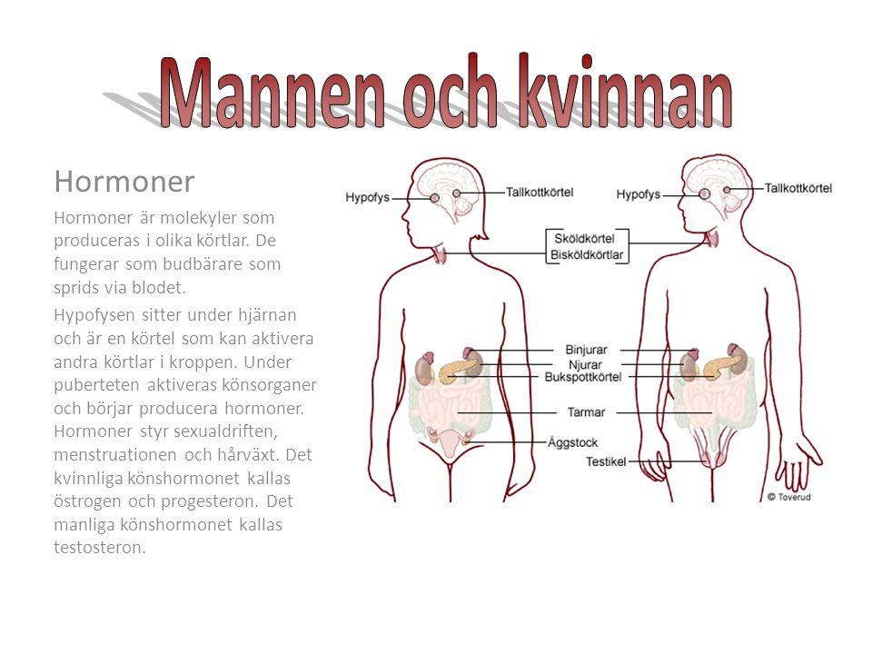 molekyler i kroppen